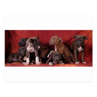 Pitbull puppy heaven postcard