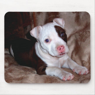 Pitbull Puppy Mousepad