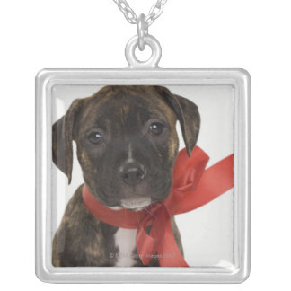 Pitbull puppy wearing red ribbon silver plated necklace