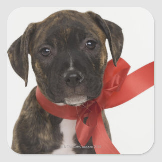 Pitbull puppy wearing red ribbon square sticker