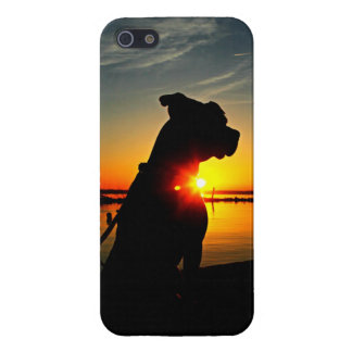 Pitbull Sunrise Case For iPhone 5/5S
