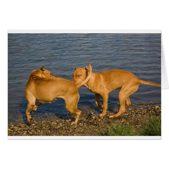 pitbulls in love card