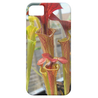 Pitcher Plant case