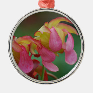Pitcher Plant Family Christmas Ornament