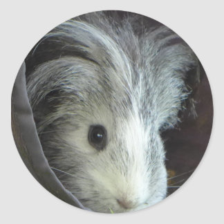 Pixle the guinea pig round sticker