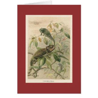 PJ Smith - Chameleons Card