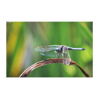 Placid Blue Dragonfly Gallery Wrapped Canvas