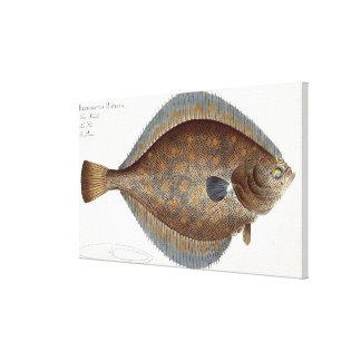 Plaice (Pleuronectes Platessa) plate XLII from 'Ic Canvas Print