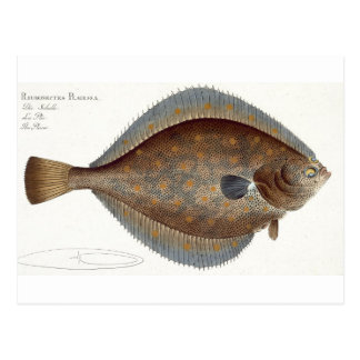 Plaice (Pleuronectes Platessa) plate XLII from 'Ic Postcard