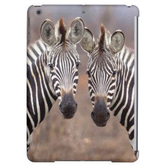 Plain Zebras, Kruger National Park