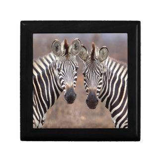 Plain Zebras, Kruger National Park Gift Box