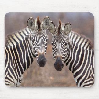 Plain Zebras, Kruger National Park Mouse Mat