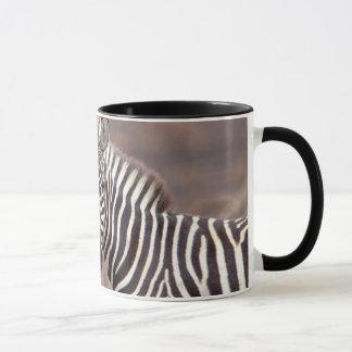 Plain Zebras, Kruger National Park Mug
