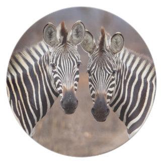 Plain Zebras, Kruger National Park Plate