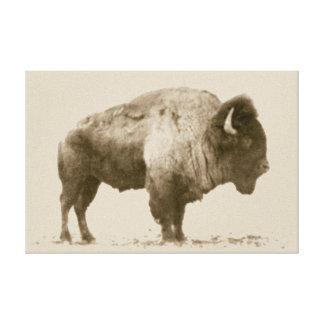 Plains Bison Stretched Canvas Print