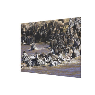 Plains Zebra (Equus quagga) and Blue Wildebeest Canvas Print