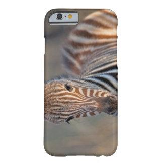 Plains zebra (Equus quagga) foal, Mkhuze Game Barely There iPhone 6 Case