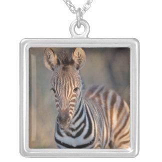 Plains zebra (Equus quagga) foal, Mkhuze Game Square Pendant Necklace