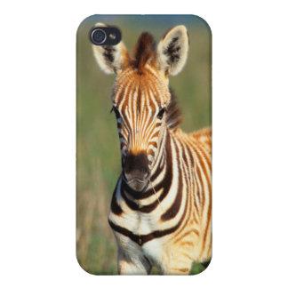 Plains Zebra (Equus Quagga) Foal Portrait Case For The iPhone 4