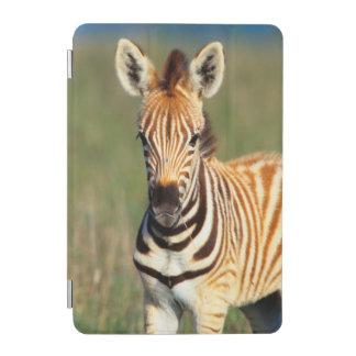 Plains Zebra (Equus Quagga) Foal Portrait iPad Mini Cover