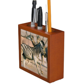 Plains Zebra (Equus Quagga) Foal Startled Desk Organiser