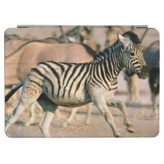 Plains Zebra (Equus Quagga) Foal Startled iPad Air Cover