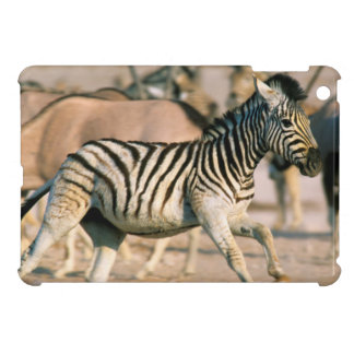 Plains Zebra (Equus Quagga) Foal Startled iPad Mini Cover