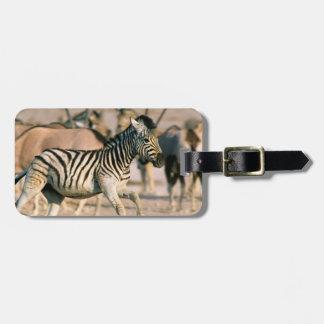 Plains Zebra (Equus Quagga) Foal Startled Luggage Tag
