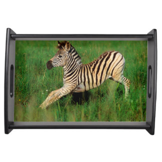 Plains Zebra (Equus Quagga) Foal Stretching Serving Tray