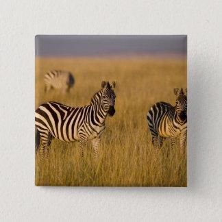 Plains Zebra (Equus quagga) in grass, Masai Mara 15 Cm Square Badge
