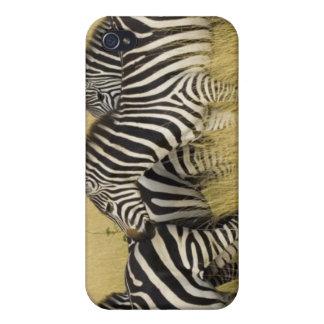Plains Zebra (Equus quagga) in grass, Masai Mara 2 iPhone 4/4S Cases