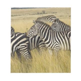 Plains Zebra (Equus quagga) in grass, Masai Mara 2 Notepad