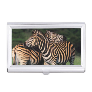 Plains Zebra (Equus Quagga) Pair Bonding, Tala Business Card Holder