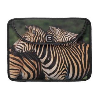 Plains Zebra (Equus Quagga) Pair Bonding, Tala Sleeve For MacBooks
