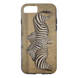 Plains Zebra (Equus quagga) pair grooming, Masai iPhone 8/7 Case