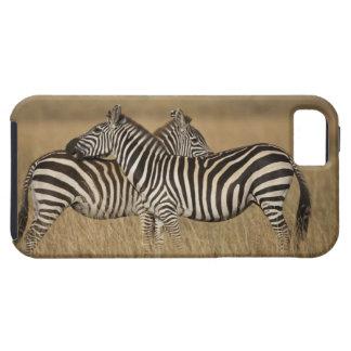 Plains Zebra (Equus quagga) pair grooming, Masai Tough iPhone 5 Case