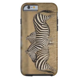 Plains Zebra (Equus quagga) pair grooming, Masai Tough iPhone 6 Case