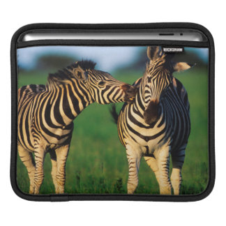 Plains Zebra (Equus Quagga) Pair Grooming, Tala iPad Sleeve
