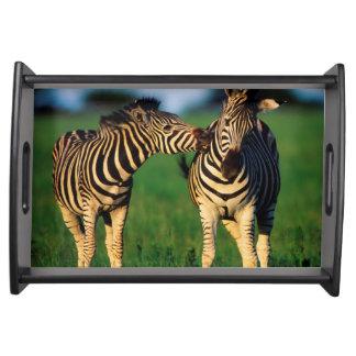 Plains Zebra (Equus Quagga) Pair Grooming, Tala Serving Tray