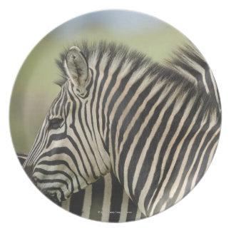 Plains Zebra (Equus quagga) pair, Haga Game 2 Dinner Plates