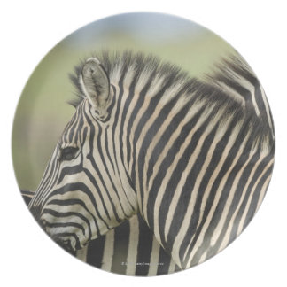 Plains Zebra (Equus quagga) pair, Haga Game 2 Plate