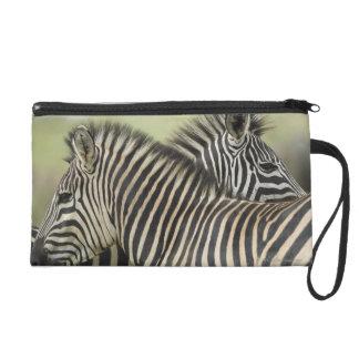 Plains Zebra (Equus quagga) pair, Haga Game Wristlet Clutch