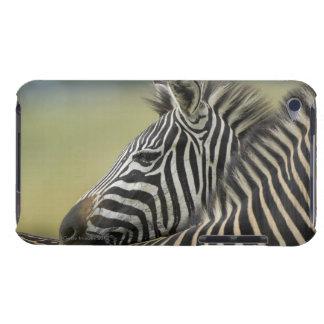 Plains Zebra (Equus quagga) pair, Haga Game Barely There iPod Case