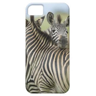 Plains Zebra (Equus quagga) pair, Haga Game Case For The iPhone 5