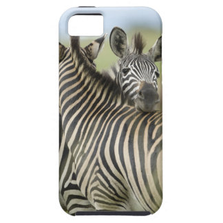 Plains Zebra (Equus quagga) pair, Haga Game iPhone 5 Case