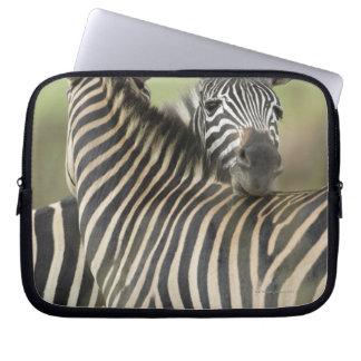 Plains Zebra (Equus quagga) pair, Haga Game Laptop Sleeve