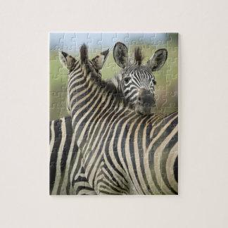 Plains Zebra (Equus quagga) pair, Haga Game Puzzles
