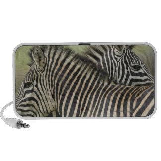Plains Zebra (Equus quagga) pair, Haga Game Travel Speakers