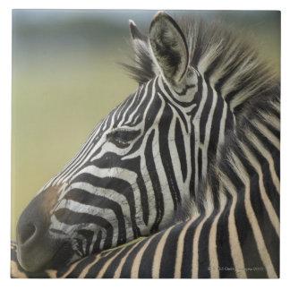 Plains Zebra (Equus quagga) pair, Haga Game Tile