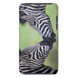 Plains zebra (Equus quagga) pair interacting iPod Touch Covers